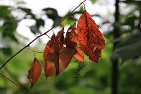 Fotokaart herfst