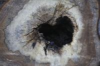Fotokaart hout 14