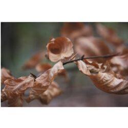 Herfst 01 - fotokaart