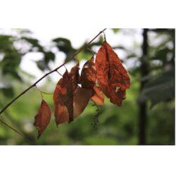 Herfst 02 - fotokaart
